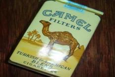 骆驼(软黄)